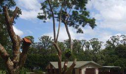 Trees Website